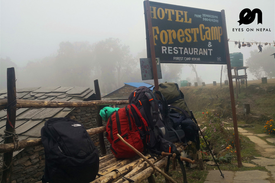 hotel forest camp